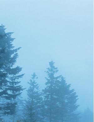 Foggy Forest image photo.